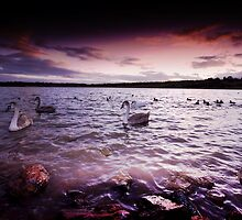 Swan Lake by Darius Kay