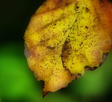 Autumn Leave by Daidalos
