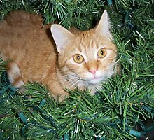 COLBY! in Trees by Diane Trummer Sullivan