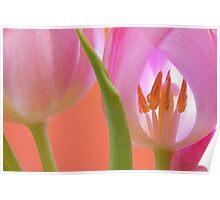 Tulips Macro Poster