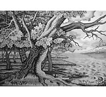The Old Oak Photographic Print
