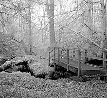 Dunearn Burn, Forres by Mark Ozanne