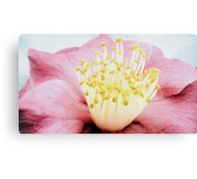 Hibiscus crown Canvas Print