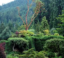 Arbutus In The Garden by Jann Ashworth