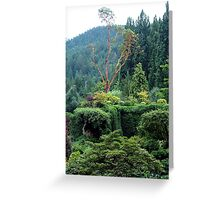Arbutus In The Garden Greeting Card