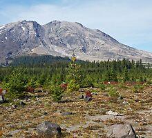 Mt St Helens by Julia Washburn