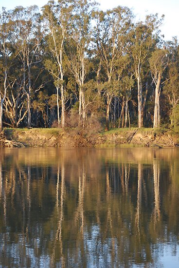Afternoon on The Murray by MissyD