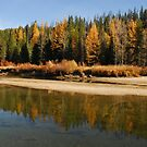 Tamarack Gold in Upper Payette River by Janet Houlihan