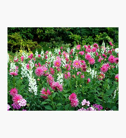 Dahlias and Snapdragons Photographic Print