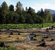 Field of Stumps by Julia Washburn