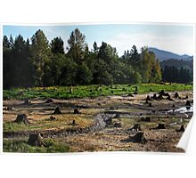 Field of Stumps Poster