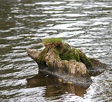 Crocodile Rock??  Swimmin' Pig, with crew-cut!! by dougie1page2