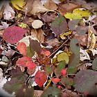 Just a Sprinkle of Color by CarolLeesArt