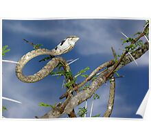 Twig Snake - South Africa Poster
