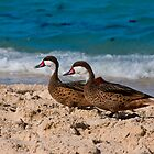 St. Thomas Ducks by JWallace