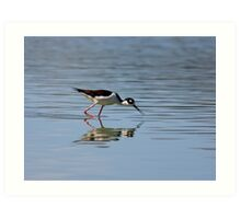 Reflections of a Black-necked Stilt Art Print