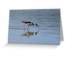 Reflections of a Black-necked Stilt Greeting Card