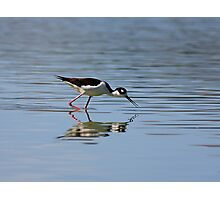 Reflections of a Black-necked Stilt Photographic Print