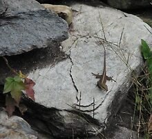 Smoky Mountains - Anole by JeffeeArt4u