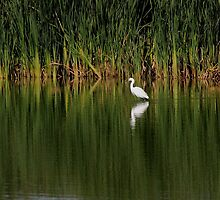 Snowy Egret in the Marsh by Wing Tong