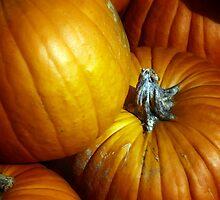 Pumpkins by Wendy Mogul