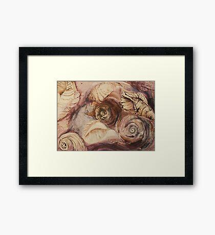 Shell Collage Framed Print