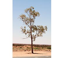 Outback Tree - Northern Territory Photographic Print