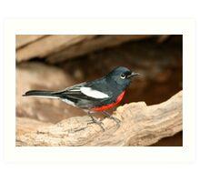 Warbler, Painted Redstart Art Print