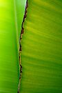Banana Leaf in Abstract 0525 by Larry Costales