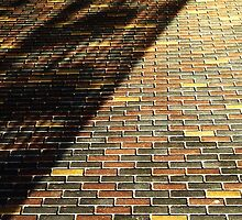 Sun shadows by Bluesrose