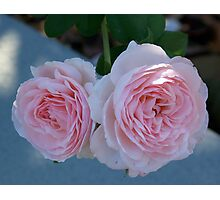 Two Pink Roses are Better than One Photographic Print