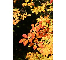 Fall Colour Photographic Print