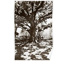 Faraway Tree Poster