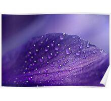 Purple rain ... drops Poster