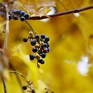 Lake Anne Fall Berries by Bob Purdy