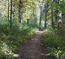 Peaceful Path by Cathy O. Lewis