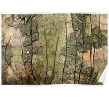 Wrinkled Bark Poster