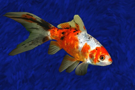 Shebumkin Fish by Marija