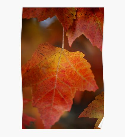 Autumn Red Lights  Poster