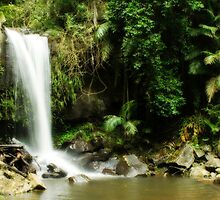 Curtis Falls - Tamborine Mountain by Angela Noyes