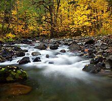 Autumn Voyage by DawsonImages