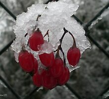 Winter Berries by Stephanie Exendine