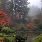 One Foggy Fall Morning in Portland Japanese Garden by davidgnsx1