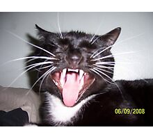 Cats Fangs Photographic Print