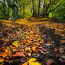 Golden Leaves of Autumn by David Lewins LRPS