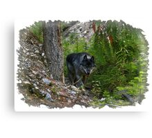 Stalking Grey Wolf and Forest Canvas Print