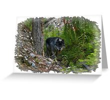 Stalking Grey Wolf and Forest Greeting Card