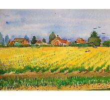 Daffodils field,East Anglia. Photographic Print