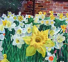 Daffodils with brickwall. by Hopebaby