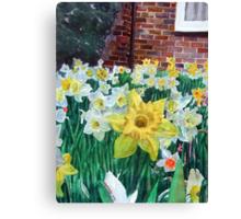 Daffodils with brickwall. Canvas Print